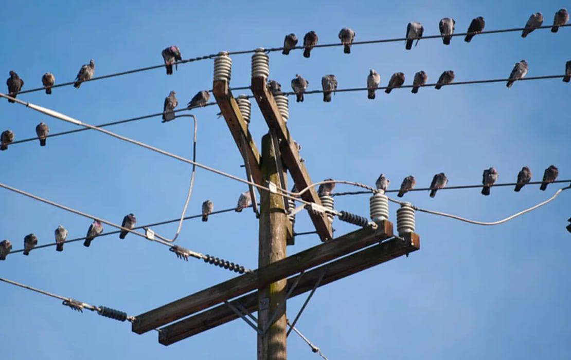 Control de aves con sistema láser