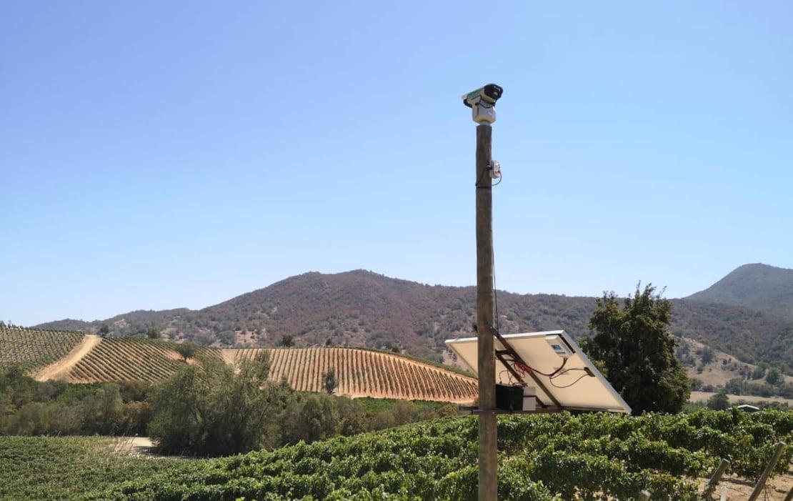 BirdLaser controlando la presencia de aves en viñedo