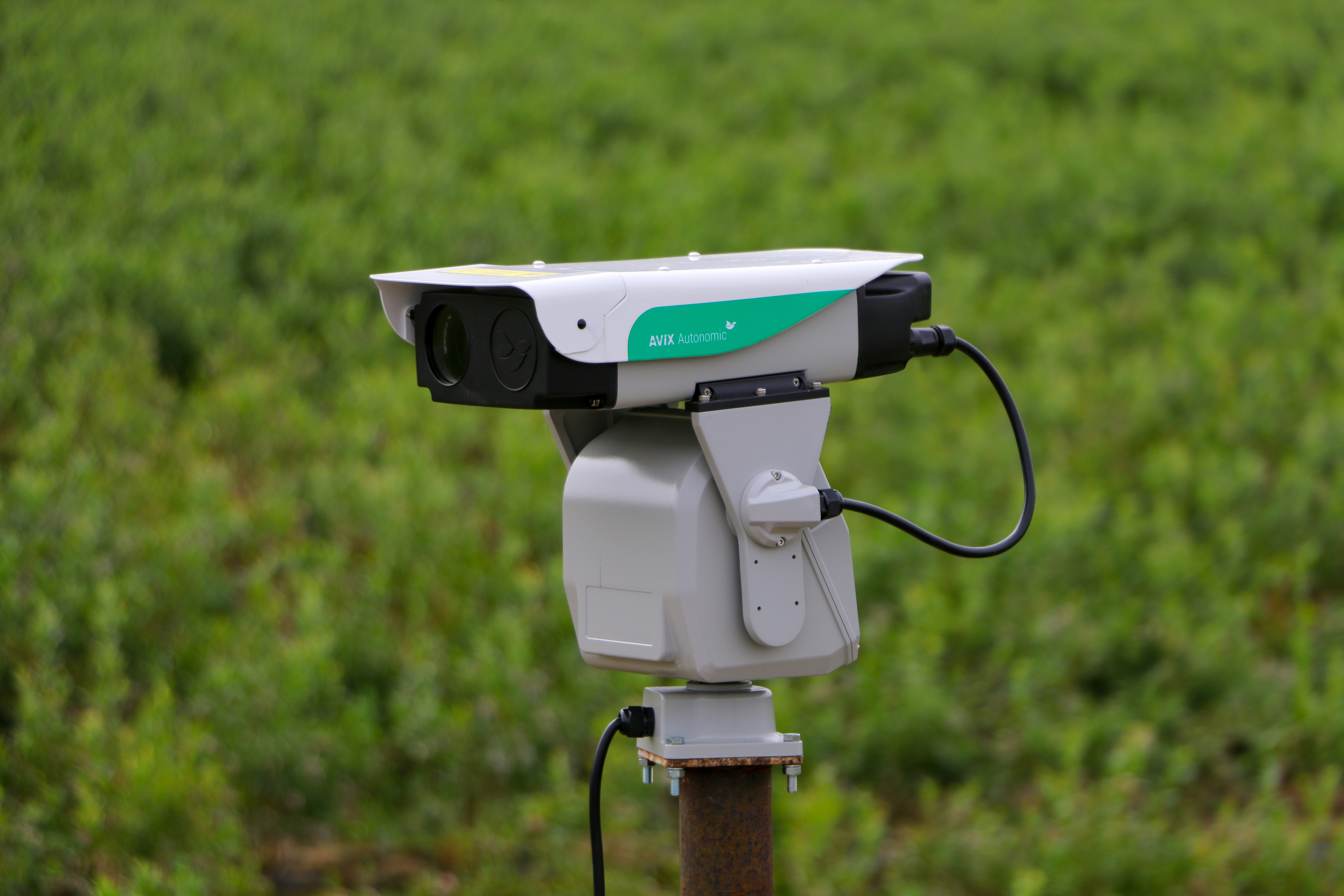 BirdChile Tecnologia Laser Ahuyenta Aves