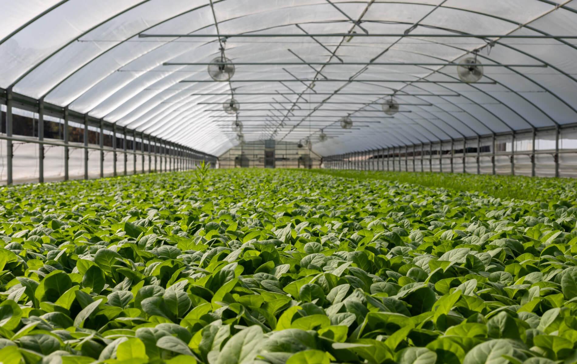 Las Nanoburbujas y sus beneficios en la Agricultura