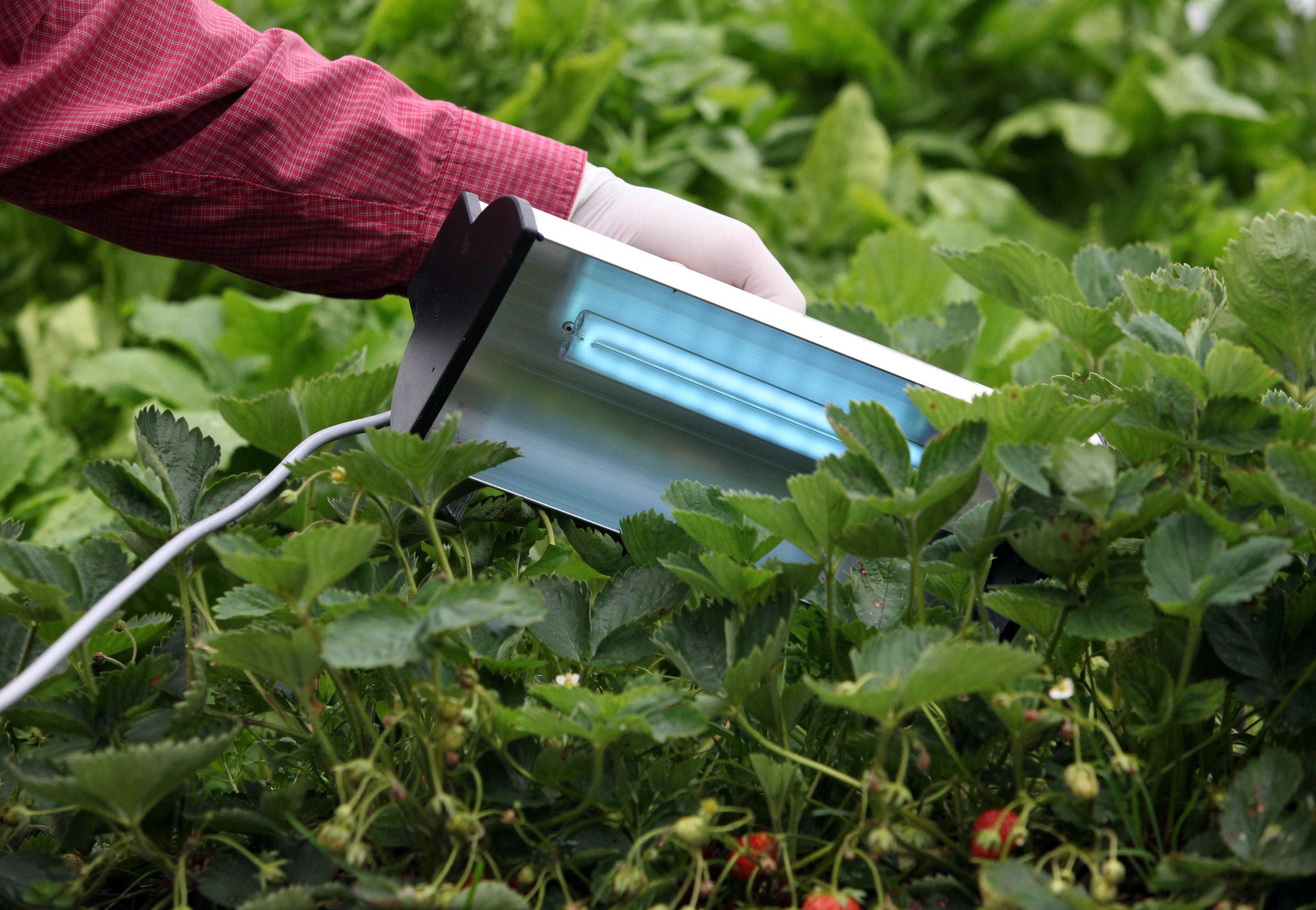 3 maneras de optimizar la producción agrícola conHood de Clean UV