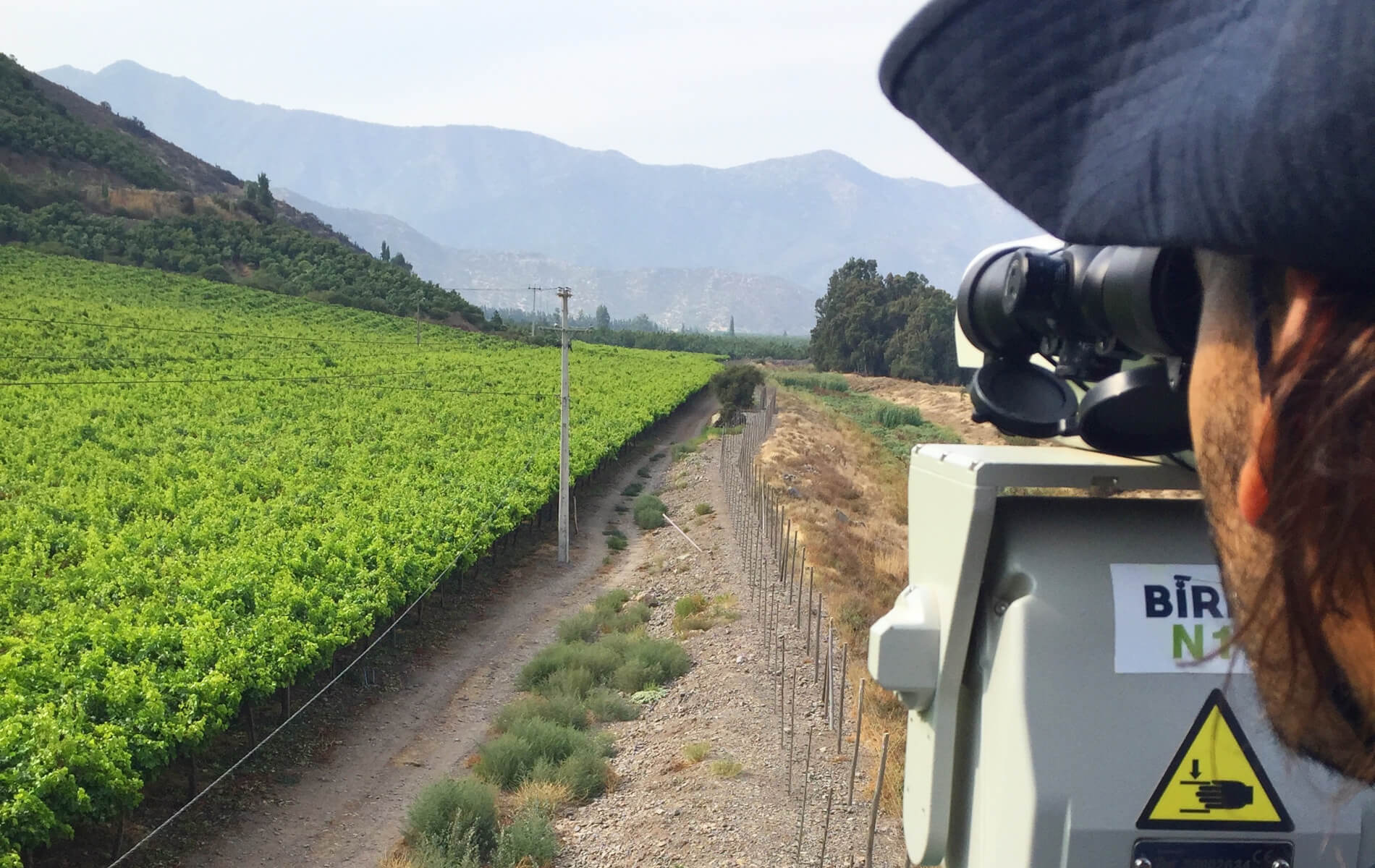 La tecnología láser acabó con el picoteo en estos productores de uva