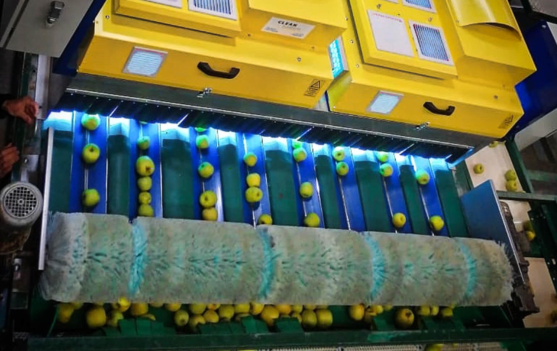 Poscosecha y packing sin hongos, bacterias ni virus: estudios y casos