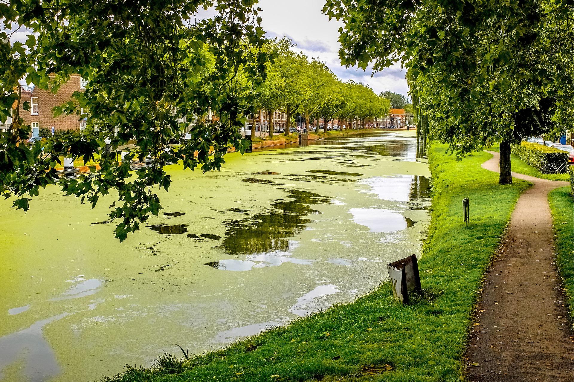 Conoce los métodos disponibles en el mercado para el control de algas